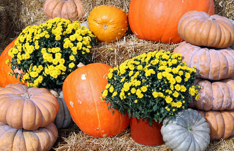 Decorating Ideas For Fall and Halloween